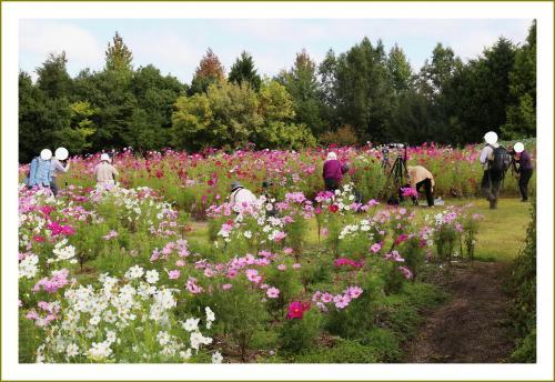 Solitary Journey [1279] すっかり秋ですね~♪コスモスが満開!時計草の花も咲いていました。<国営備北丘陵公園>広島県庄原市