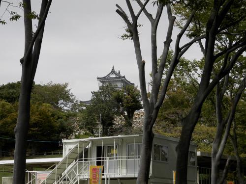 グーちゃん、秋の本合宿で浜松へ行く!(いえやす君と浜松城と浜松餃子編)