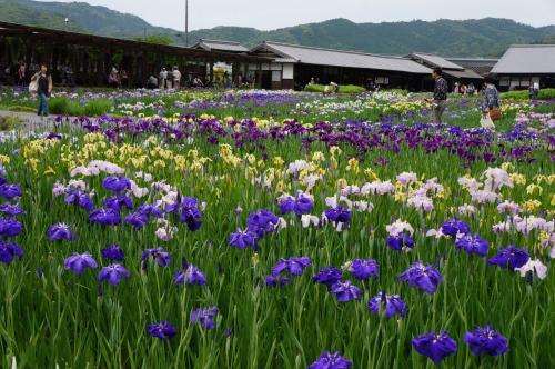 2013.6 静岡~遠州森町・掛川・磐田~