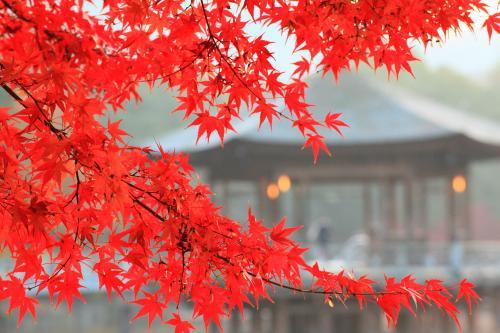 奈良 晩秋の奈良公園