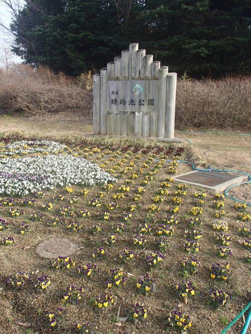 『蜻蛉池公園』で水仙!&ちょこっと菜の花やロウバイも...(大阪府岸和田市)