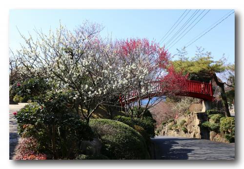 Solitary Journey [1331] 一足早い春の訪れ♪を感じさせてくれる~光の花物語'梅まつり'<冠山総合公園梅の里> 山口県光市