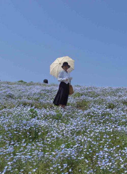 日傘の女    ひたち海浜公園