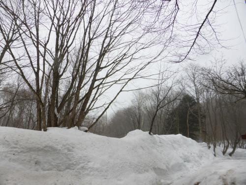 県道36号線 春の予感