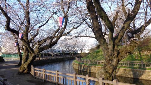 群馬県大泉町~邑楽町・お花見散策