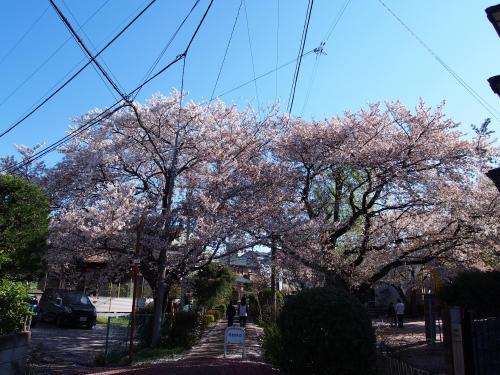 '埼玉'発祥の地、春のさきたま古墳群へ