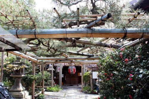 京都の桜、雨宝院&妙蓮寺♪ココはきっと穴場だね。ラーメン激戦区一乗寺の人気店、高安でランチ♪