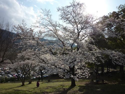 さがみ湖プレジャーフォレスト☆満開の夜桜と関東最大級のイルミネーションおまけにプロジェクションマッピング