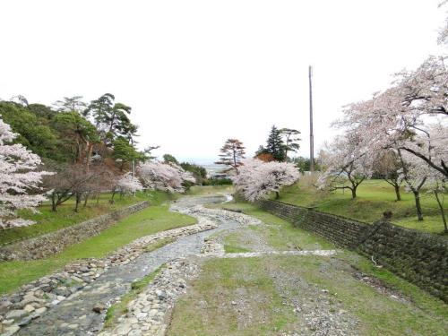 養老公園の桜2014