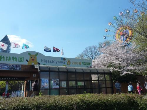 春爛漫 桜満開♪ 東山動物園2014