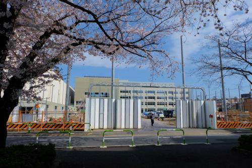 桜の花咲く小さな公園 赤羽公園