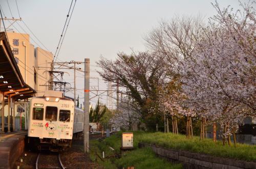 たま電車の「たま駅長」を追いかけて桜と桃の花が咲く和歌山電鐵貴志川線に訪れてみた