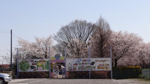 桜追っかけ一人旅(71) 真岡市 りす園