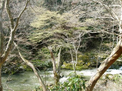 イワウチワを訪ねて北茨城花貫渓谷から横根山・都室山に登る