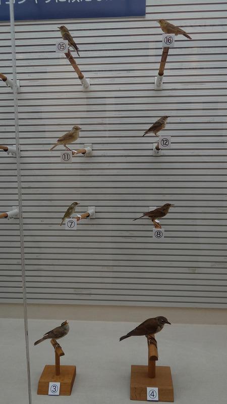 桜追っかけ一人旅(96) 我孫子市 鳥の博物館 中巻