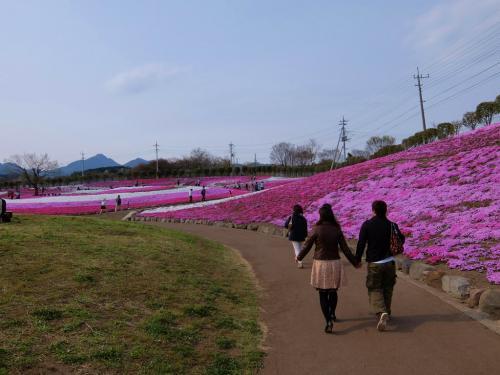 群馬県 箕郷町 春の一日 芝桜