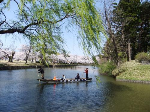 満開鶴岡公園(山形県)のさくらと日本海へしずむ、すばらい夕陽と宿