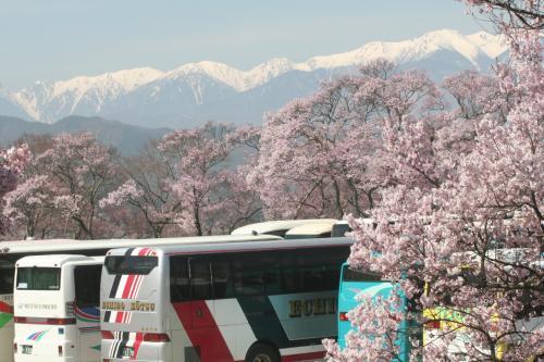 高遠から甲州へ桜めぐり旅