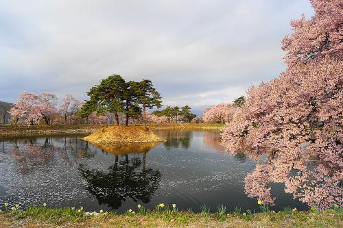長野の桜めぐり 2014年 高遠編