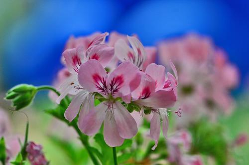 花フェスタ記念公園の感謝ディーから野外民族博物館リトルワールドへ