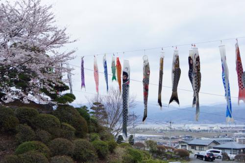 長野の桜めぐり 2014年 諏訪編
