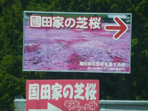 色鮮やかな 花のじゅうたん・・郡上八幡 国田家の芝桜・・・・・・
