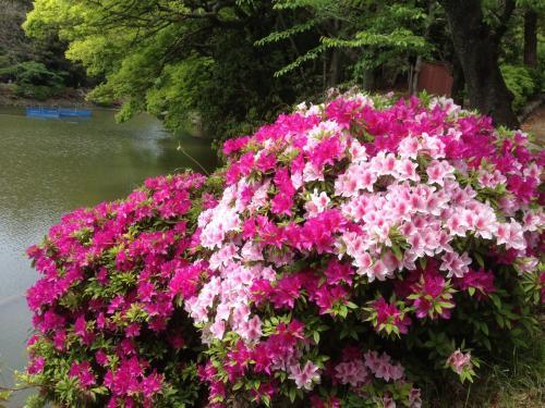 春を満喫出来ます。鶴舞公園