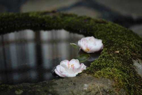 2014 室生路をゆく No1/2 女人高野で石楠花を愛でる