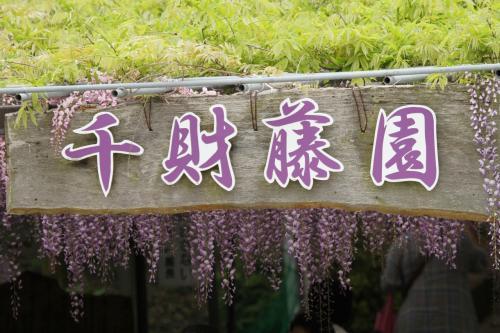 Solitary Journey [1374] 藤園と昭和の町とバラ園と石橋巡り~それに'ととろの森'へ<九州縦断車旅>大分・熊本・鹿児島・宮崎県