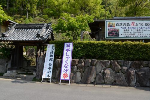木の館・豊寿庵に遊ぶ