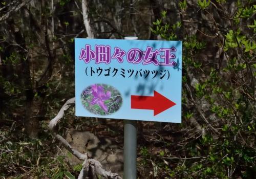 ツツジ咲く八方ヶ原 前編 ~トウゴクミツバツツジと剣が峰登山~