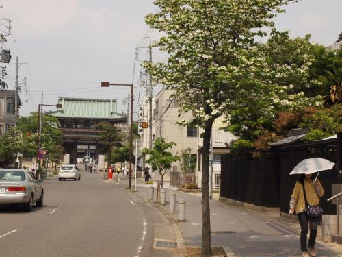 「名古屋飛ばし」って、本当ですか? ~ えっ、「寿がきや」って和風とんこつラーメンなの?! 寿がきやラーメンだとばかり思ってたんだがね。編