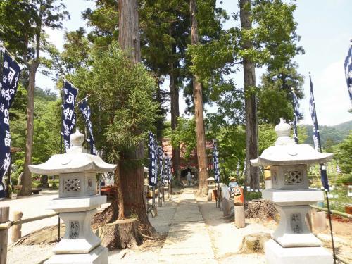 芍薬を見に、南陽市諏訪神社に!