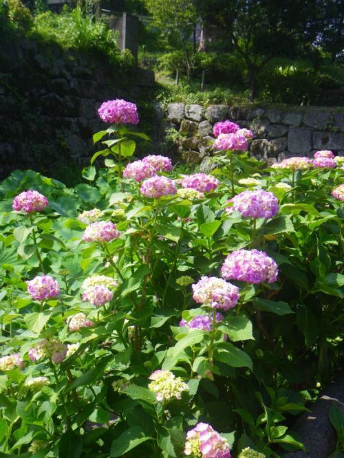 初夏の午後、梅雨の合間の花の舞---。