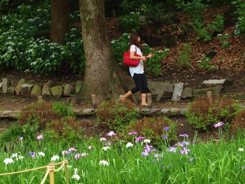 初夏 明治の代表的な日本庭園 清澄庭園 下