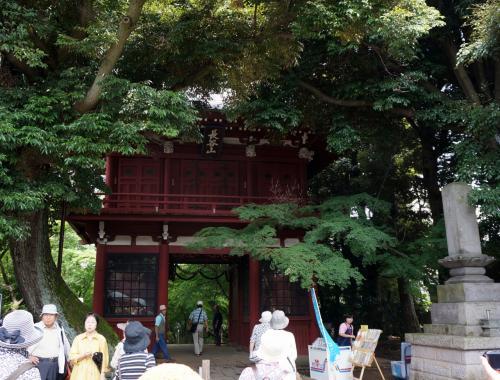 松戸 本土寺(あじさい寺) 2014
