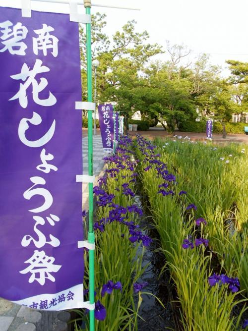 碧南市油ヶ渕遊園地「花しょうぶまつり」