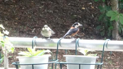 雨の中、ヤマガラさんの親鳥は働き者です。