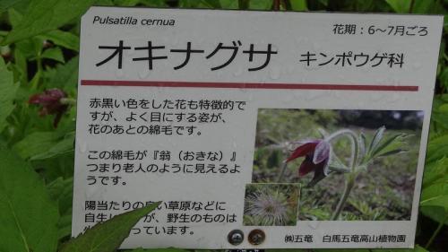 乳白色の温泉紀行(18)・・・白馬五竜高山植物園<3> 植物園散策後テレキャビンで下の「とおみ駅」までの下り。
