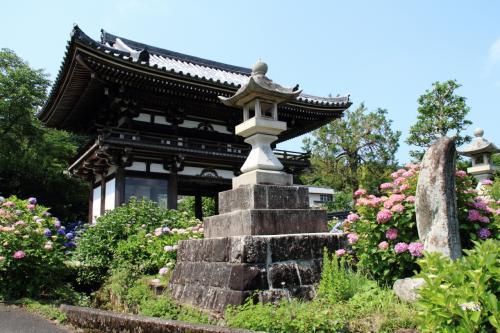 紫陽花と花菖蒲を見に関西花の寺へ!