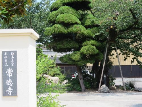 実家の母に会いに、いつもと違う道も歩き。まちかど博物館の大入道さんminiミユージアム+Yを訪ねてきました。