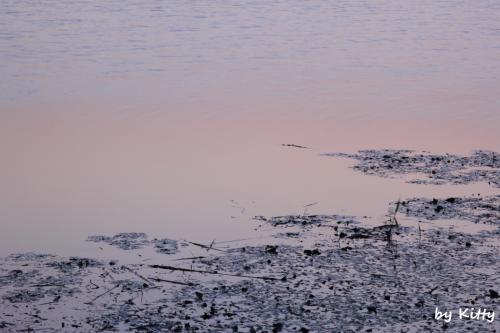 夏の千葉へ!<夜明けの印旛沼&成田ゆめ牧場のひまわり畑>