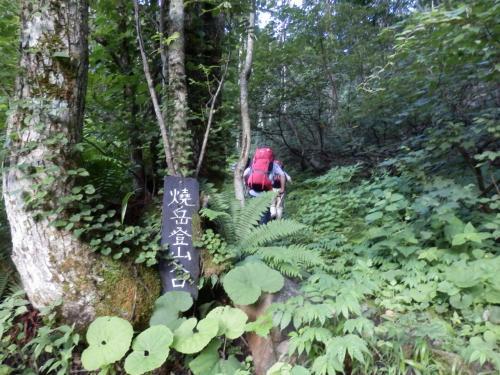 噴煙あがる焼岳 (新中ノ湯ルート~焼岳北峰 ピストン) (百名山50座)(2日目)
