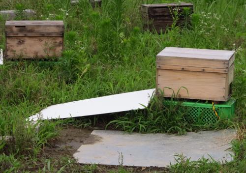 房総7 蜂蜜工房 絞りたての蜂蜜を賞味 ☆アカシアはちみつを購入