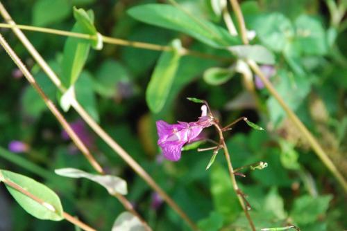 夏秋に咲く花の宝庫 「鹿沢野草園」を訪ねて(群馬)