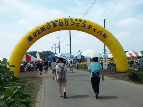 野木ひまわりフェスティバル2013年