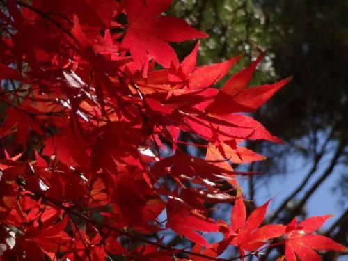 紅葉、フルーツ、花----秋の甲州路に癒されました---