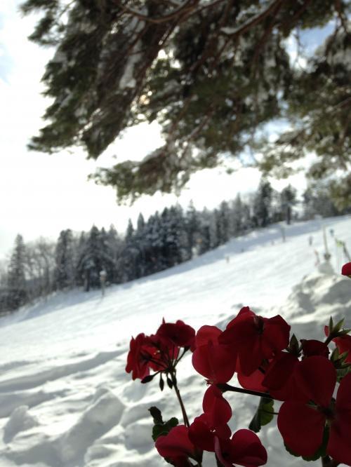 ☆年の初めは白馬八方尾根に家族でスキー♪天気予報がはずれて晴れちゃいました(>_<)日和見スキーヤーも滑る?!3日目☆