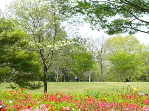 2010年5月  椿の花咲く茨城県植物園