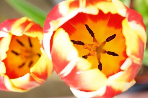 浜松フラワーパーク 花に見入る